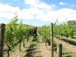 Stina in the vineyard