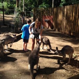 Stina petting the Roo's!