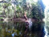 Rope swing!!
