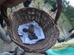 Basket o'truffle