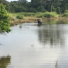Just a wild Elephant bathing by the road