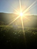 Morning hike in Nanu Oya