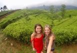 A walk through tea fields at Amaya Langdale