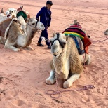 Our camel trek guide